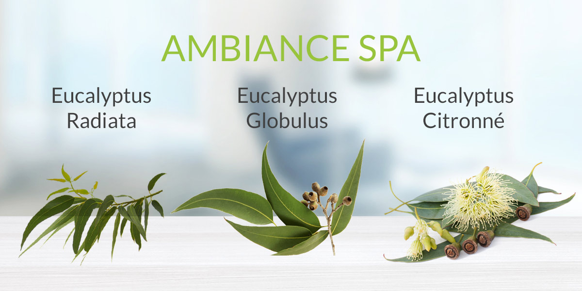 Ambiance Spa AromaCool diffuseur huiles essentielles copie